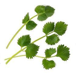 Wkład nasienny lingot zioła nietypowe biedrzeniec anyż
