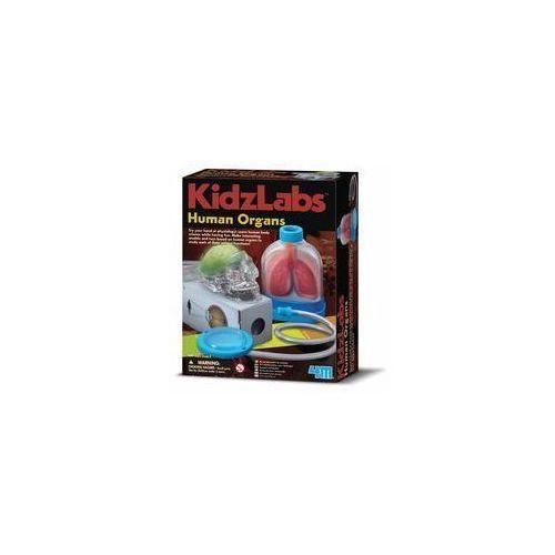 Gry dla dzieci, Russell Anatomia Narządy Człowieka 3374