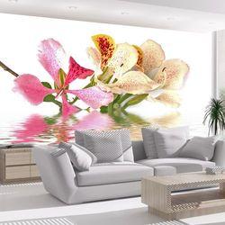Fototapeta - Kwiaty tropikalne - drzewo storczykowe (bauhinia) bogata chata