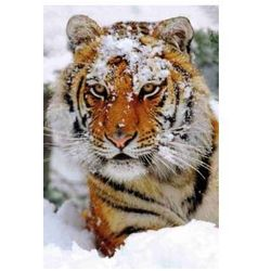 Tygrys - plakat (2)