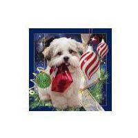 Pozostałe artykuły papiernicze, Pocztówka 3D Świąteczny Pies