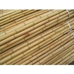 Dekoracyjna tyczka bambusowa 150cm kpl 10szt