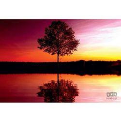 Fototapeta PARTNER Drzewo 8-007