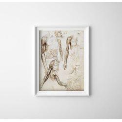 Plakat w stylu vintage Plakat w stylu vintage Mięśnie kończyn górnych Da Vinci