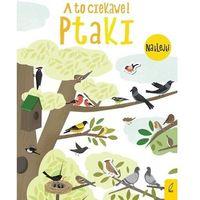 Książki dla dzieci, A to ciekawe! Ptaki (opr. broszurowa)