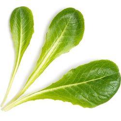 Wkład nasienny lingot warzywa liściowe sałata rzymska