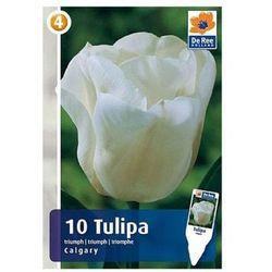 Tulipany Calgary