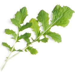 Véritable - Warzywa Liściowe - wkład nasienny - namenia sałatkowa (do doniczek autonomicznych)