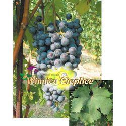 Sadzonki winorośli Dolcetto rabat 8%