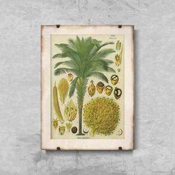 Plakaty w stylu retro Plakaty w stylu retro Plakat botaniczny z palmy kokosowej
