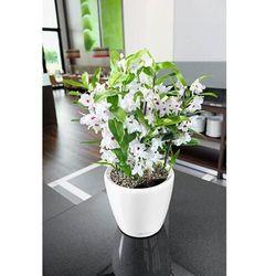 Donica lechuza classico ls - taupe (kawa z mlekiem) - 28 cm, połysk