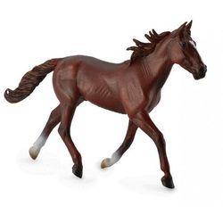 Koń rasy kusak amerykański maści kasztan xl