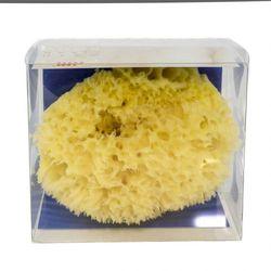 DUŻA gąbka NATURALNA z Morza Karaibskiego, Gift Box, RIFFI