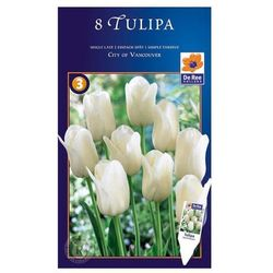 Tulipan City of Vancouver Triumph