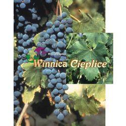 Sadzonki winorośli Negretto rabat 8%