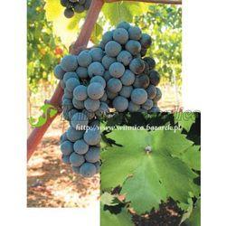 Sadzonka winorośli Primitivo rabat 8%