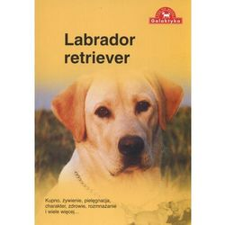 Labrador retriever (opr. miękka)